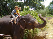 Boys riding on the back of an elephant — Stock Photo