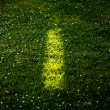Light on grass — Stockfoto