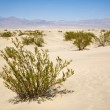 Dried desert gras in Mesquite Flats Sand Dunes in the northern point of the — Stock Photo