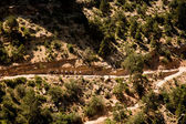Scenic Bright Angel Trail at the Grand Canyon — Stock Photo