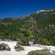 Dead trees due to a former forest fire in Yosemite Park — Stock Photo #5863193