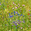 Meadow with colorful wild flowers — Stock fotografie