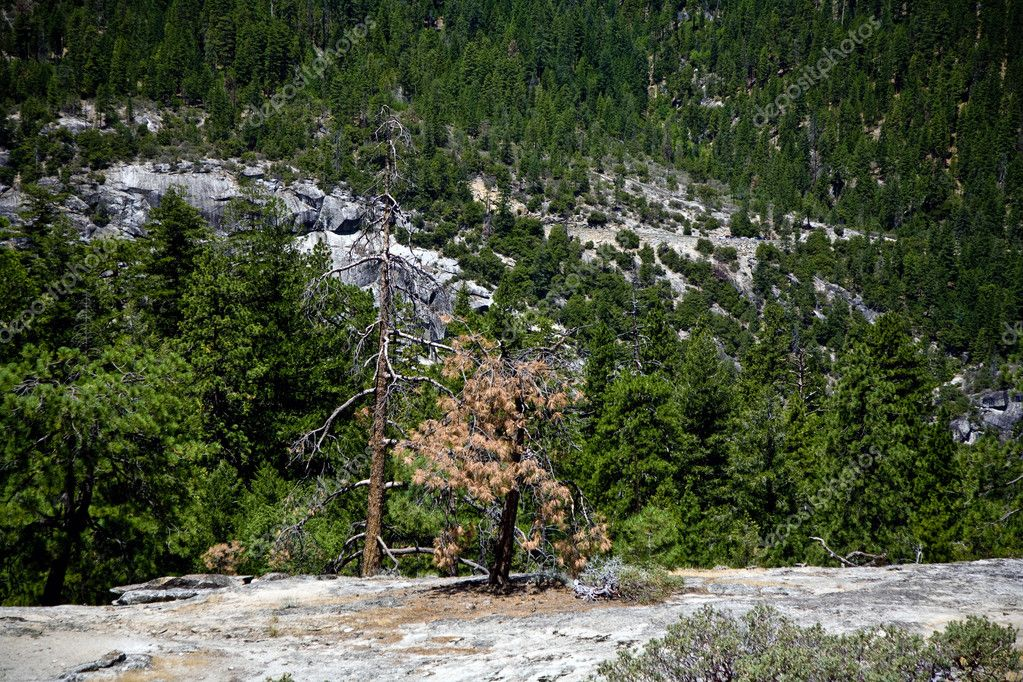 Dead trees due to a former forest fire in Yosemite Park — Stock Photo #5863196