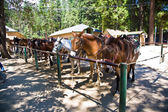 Horses for excursions in yosemite national park — Stock Photo