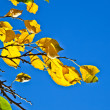 Oak leaves in harmony — Stock Photo