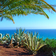 Scenic view to the ocean with palms and algarves - Stock Photo