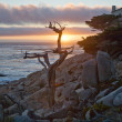 Romantic sunset with tree on rock - Stock Photo