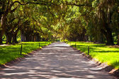 OAK alley in entrance of Plantation — Foto de Stock