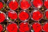 Rose fresche — Foto Stock