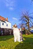 Gato bonito gosta de jardim — Fotografia Stock