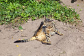 Cute cat in the garden — Stock Photo