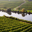 World famous sinuosity at the river Mosel near Trittenheim with — Stock Photo