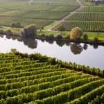 Welt berühmten Schnörkelei am Fluss-Mosel in der Nähe von Trittenheim mit — Stockfoto