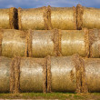 Bale of straw infold in plastic film (foil) to keep dry in autom — Stock Photo
