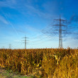 Corn field with electric tower — Stock fotografie