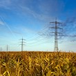 Corn field with electric tower — Stockfoto