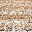 Stock Photo: Field with snow