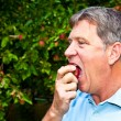 Stock Photo: Man eating an apple