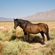 Wild horses in the prarie — Stock Photo