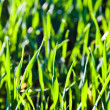 Fresh green grass with dew — Stock Photo