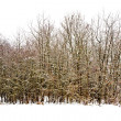 Trees in winter landscape - Foto de Stock
