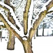 Trees in winter landscape - Foto Stock