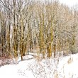 Trees in winter landscape — Photo