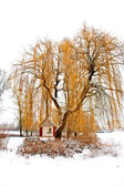 Trees in winter landscape — Stock Photo