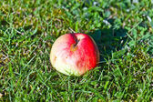 Ripe apple lying on the grass — Стоковое фото