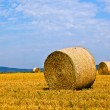 Bale of straw on field — Stock Photo