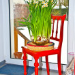 Daffodil in vase on red chair in kitchen — Stock Photo