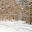 Forest in winter with snow — Stock Photo