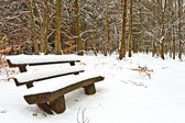 Bench in forest covered with snow — Stock Photo