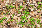 Pattern of leaves in the forest — Stock Photo