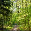 Way throught forest — Stock Photo #6642881