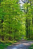 Bosque a través de manera — Foto de Stock