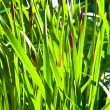 Stock Photo: Grass in wonderful morning light
