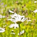 Красивые красочные луг с цветами — Стоковое фото