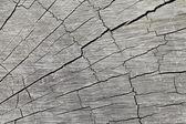 Texture of tree — Stock Photo