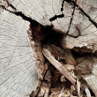 Old cracked wood - Stock Photo