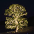 Stock Photo: Illuminated tree