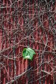 One leaf — Stock Photo
