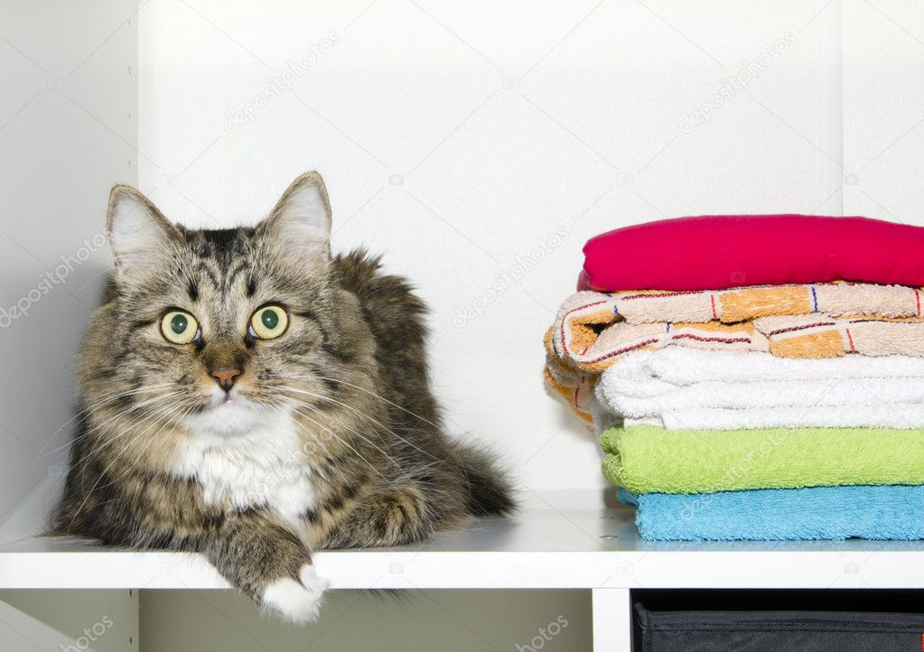 Cat and towels in wardrobe — Stock Photo #6633174