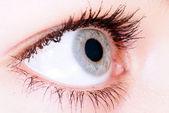 Eye in macro — Stock Photo