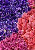 Flowering carpet. — Stock Photo