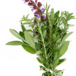 Fresh Herbs - Rosemary, Sage, Oregano - Stock Photo
