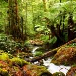 Ancient Rainforest — Stock Photo