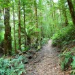Rainforest Walk — Stock Photo #5525368