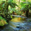Rainforest River Panorama — Stock Photo #5525393
