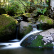 Stock Photo: Rainforest River Panorama